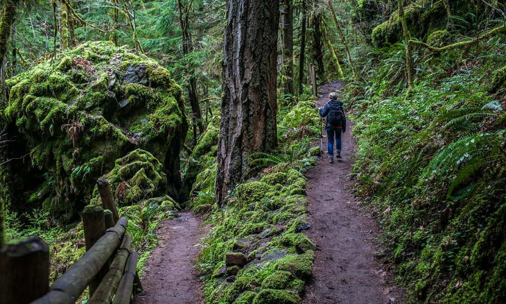 Two trails leading through Umpqua Forest